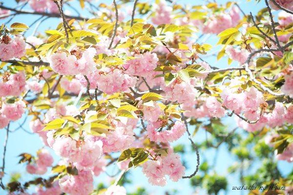 flower190421.jpg