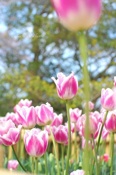 flower190422.jpg
