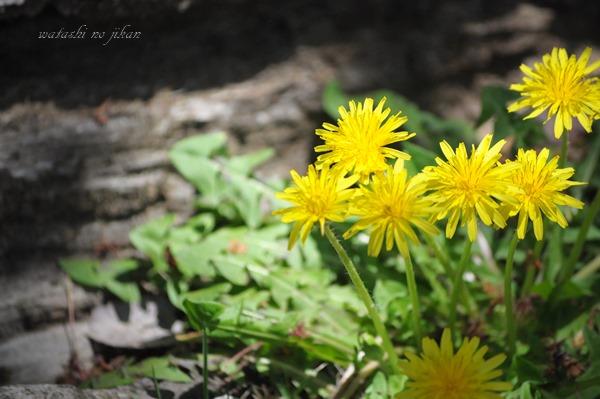 flower190423.jpg