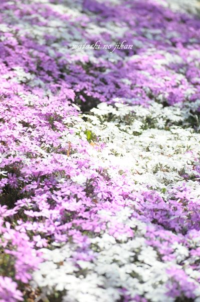 flower190427.jpg