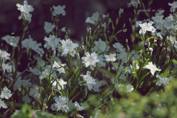 flower190428.jpg