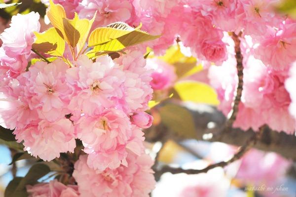 flower190501-1.jpg