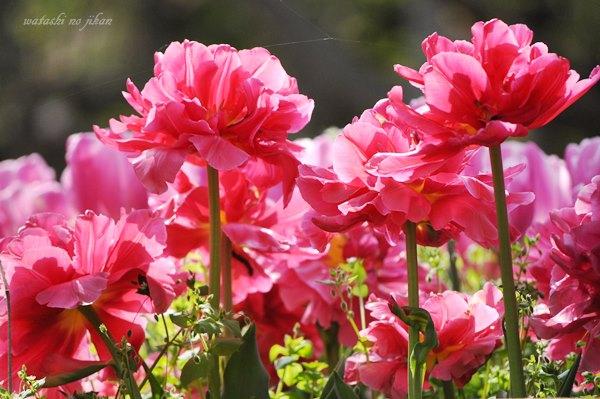 flower190507.jpg