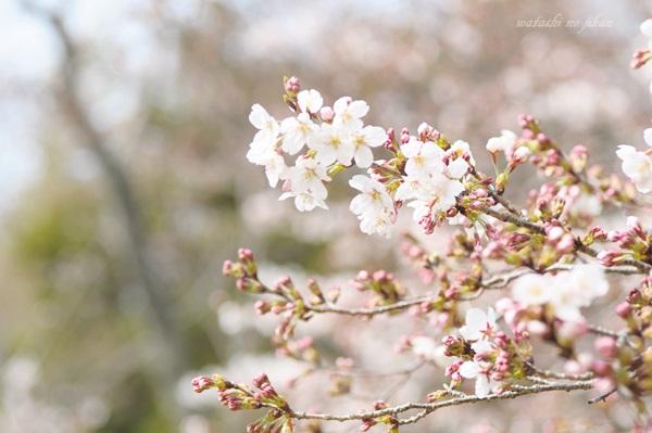 flower190510.jpg