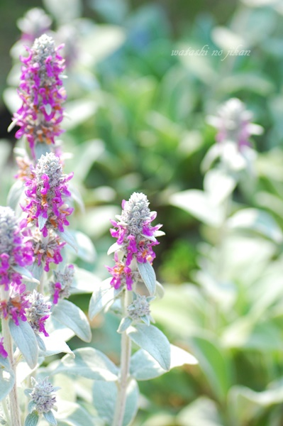 flower190511.jpg