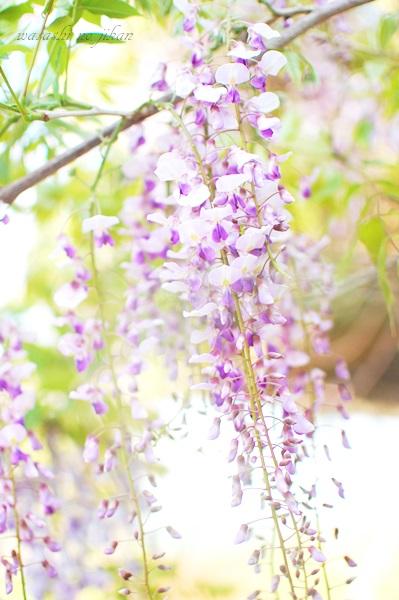 flower190515.jpg