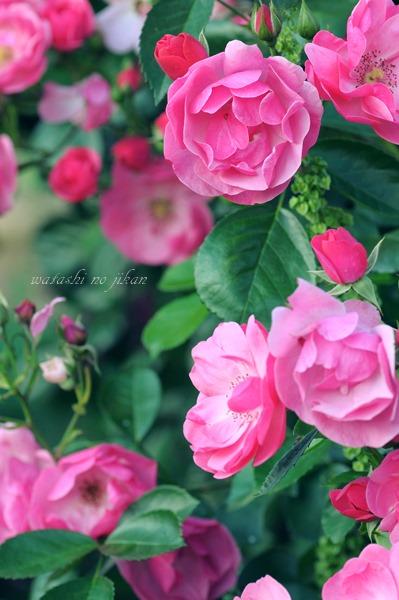 flower190531.jpg