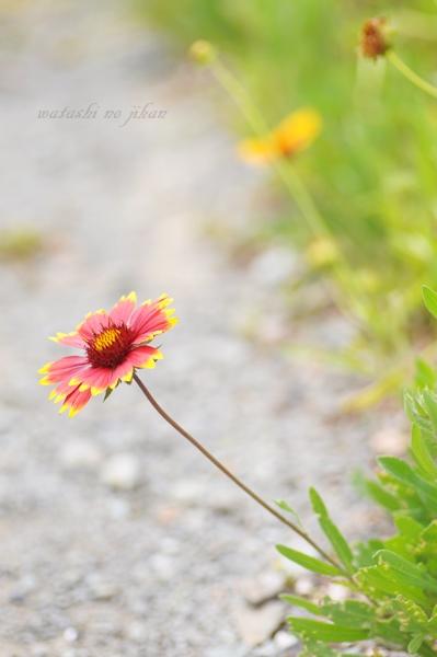 flower190618.jpg
