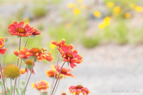 flower190619.jpg