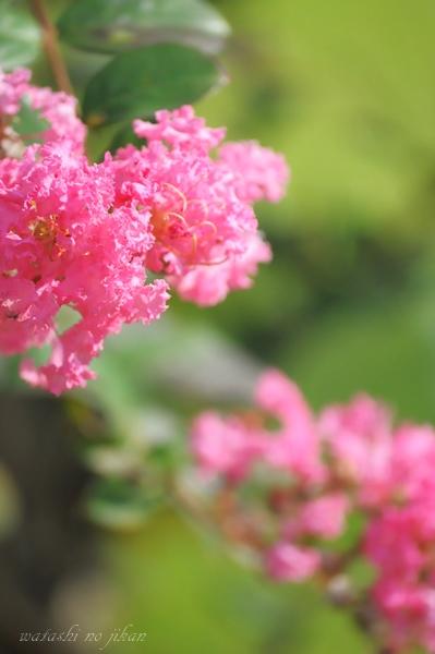 flower20190517.jpg