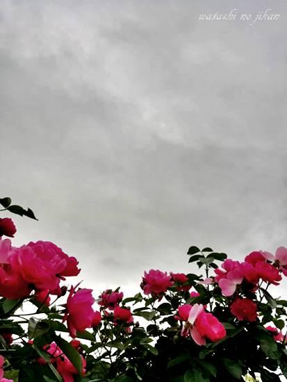 flower20190520.jpg