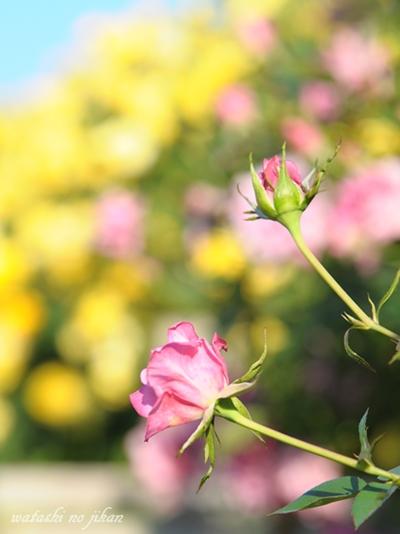 flower20190522.jpg