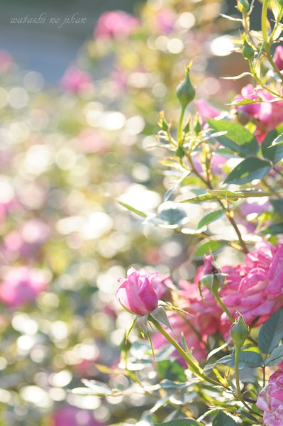 flower20190526.jpg