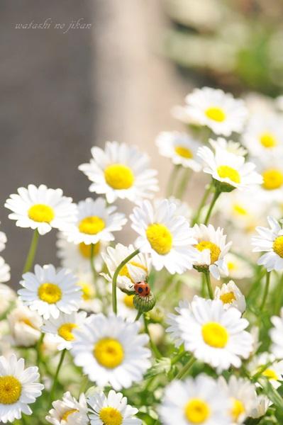 flower20190527.jpg