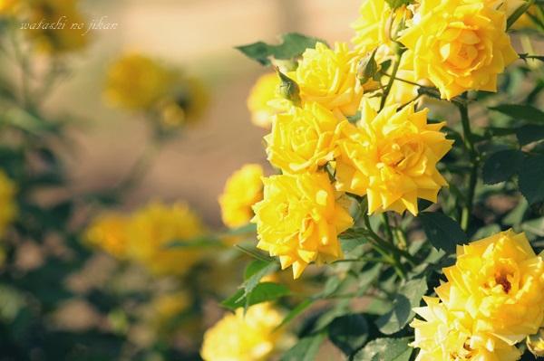 flower20190529.jpg
