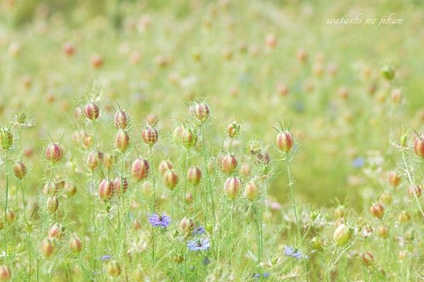 flower20190602.jpg