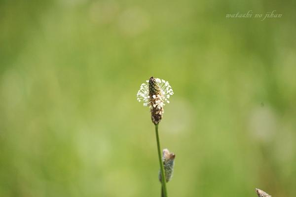 flower20190603.jpg