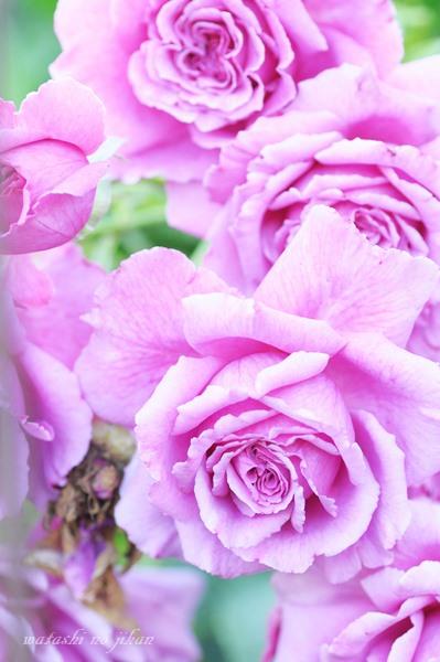 flower20190606.jpg