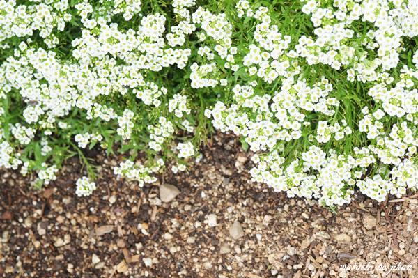 flower20190624.jpg