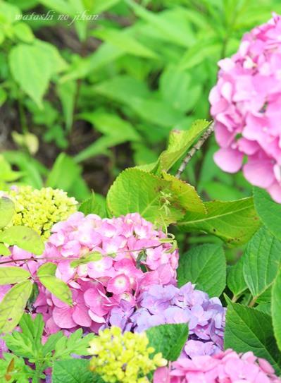 flower20190626.jpg