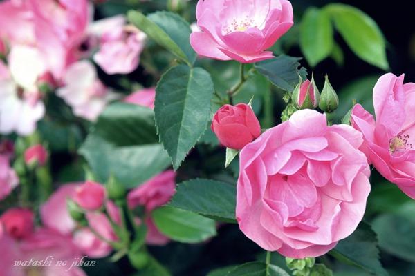 flower20190628.jpg