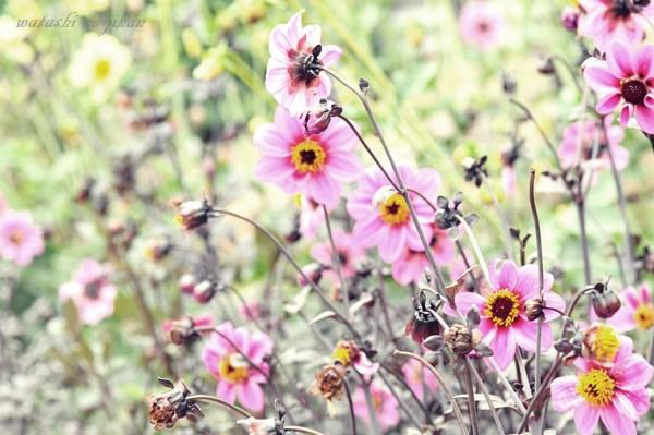 flower20190703.jpg