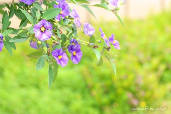 flower20190704.jpg