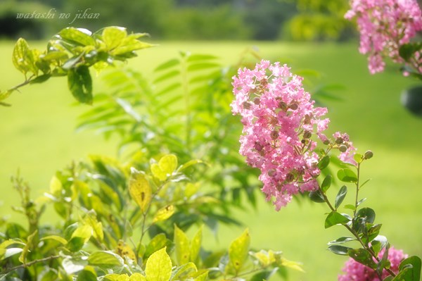 flower20190822.jpg