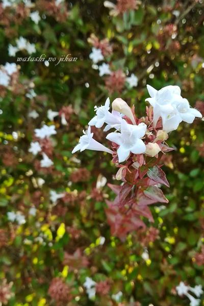 flower20190904.jpg