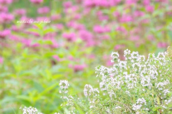 flower20190907.jpg