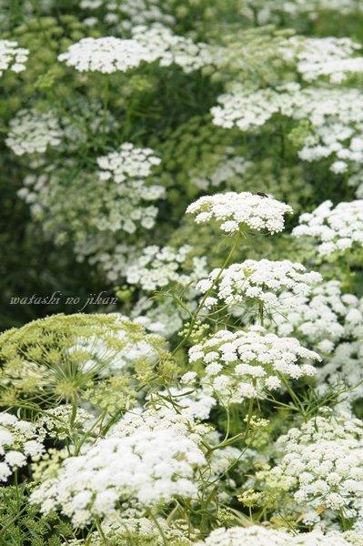 flower20190911.jpg