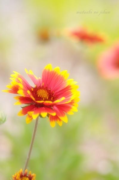 flower20190919.jpg