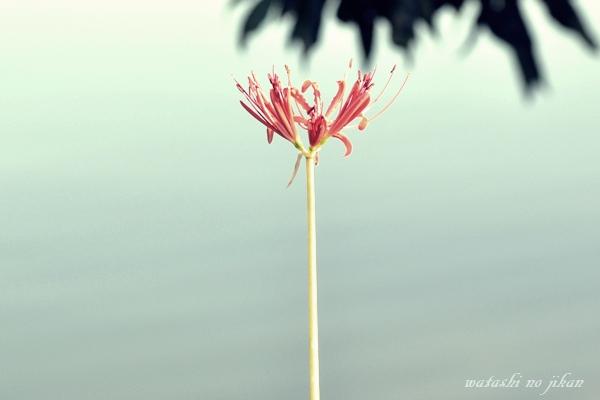 flower20191004.jpg