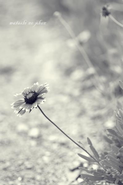 flower20191008.jpg