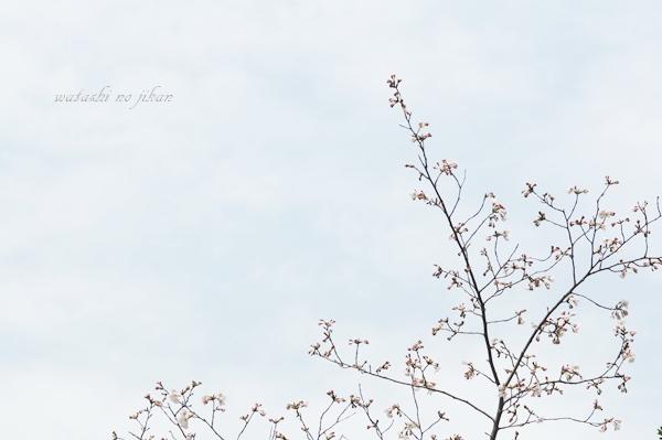 photo190403.jpg