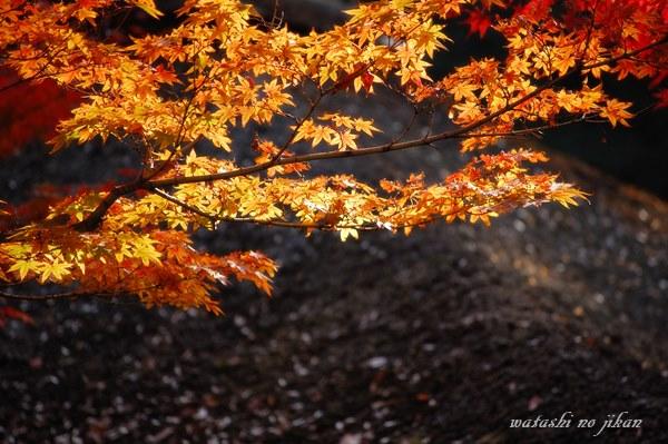 photo20191009.jpg