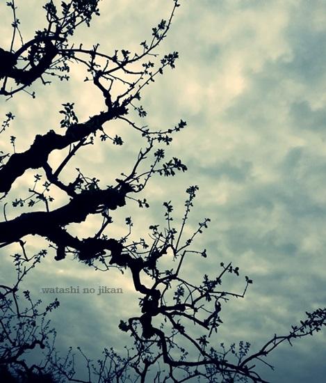 sky20190814.jpg