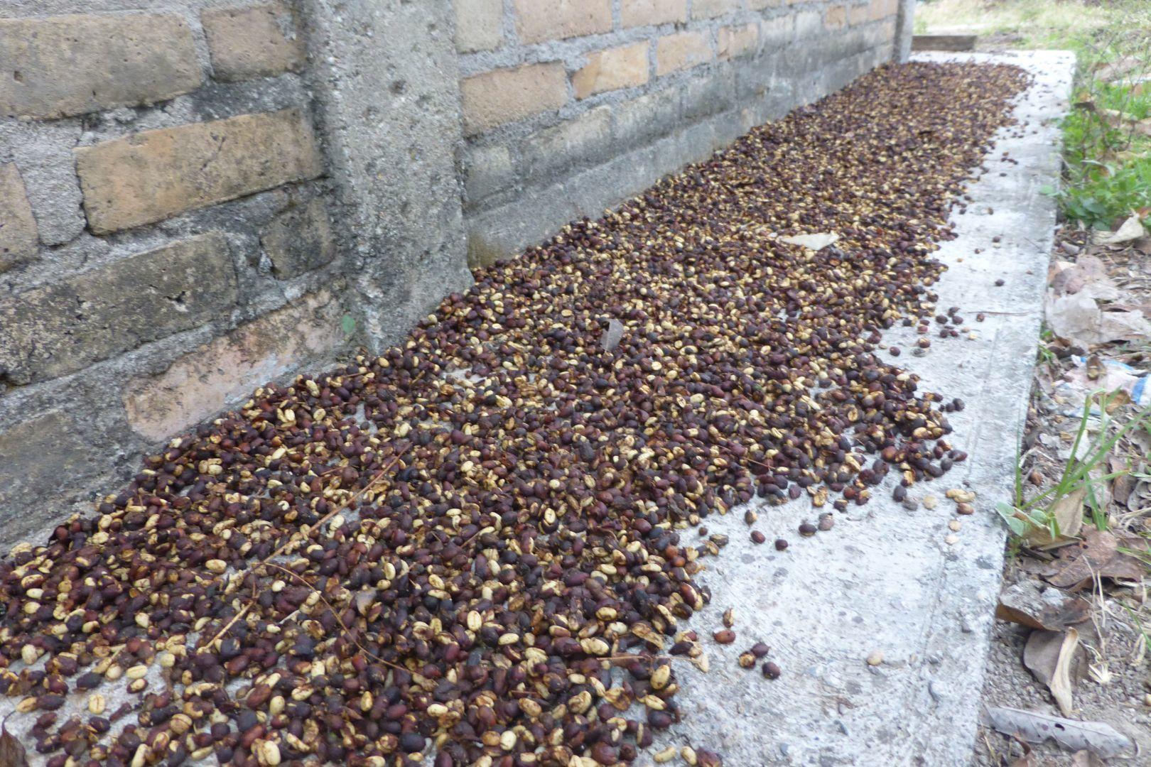 secar semillas