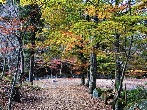 道志の森キャンプ3 049