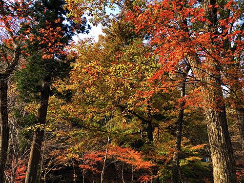道志の森キャンプ3 050