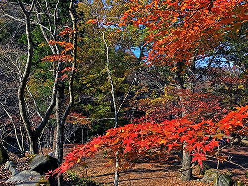 道志の森キャンプ3 061