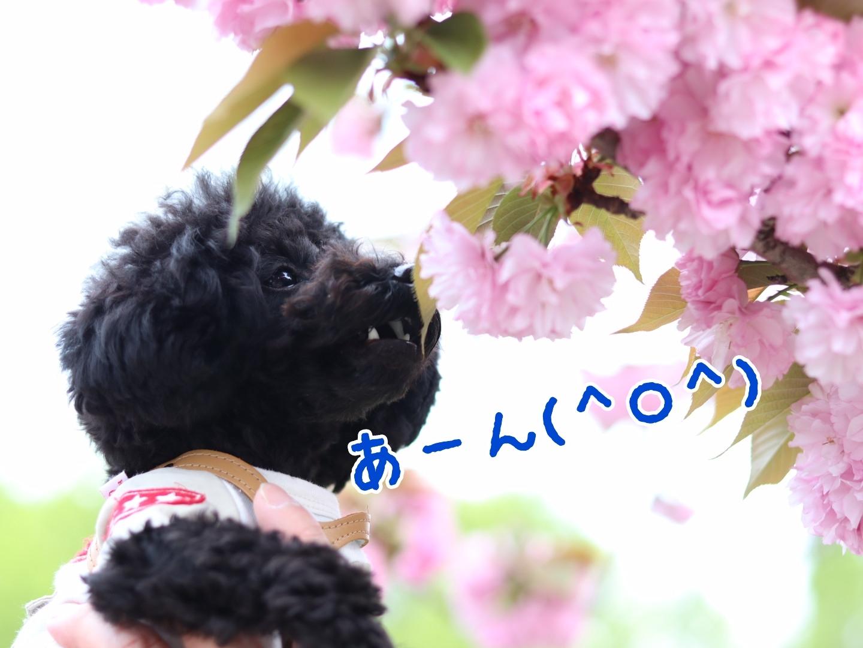 19-04-23-23-15-19-915_deco.jpg