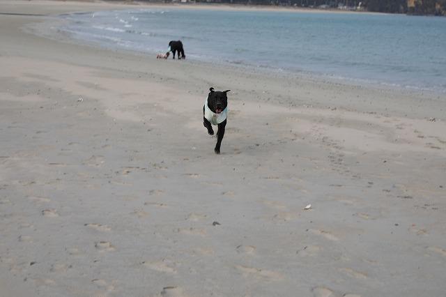 砂浜マル走る