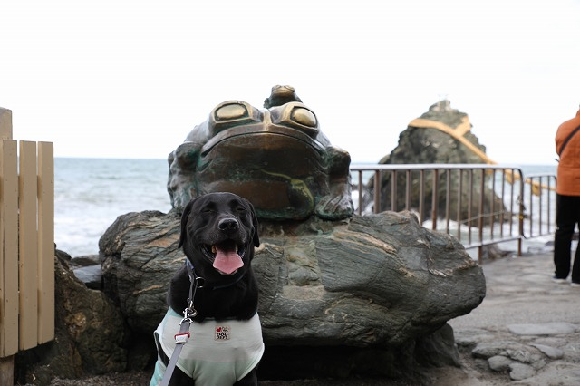 夫婦岩マルとカエル