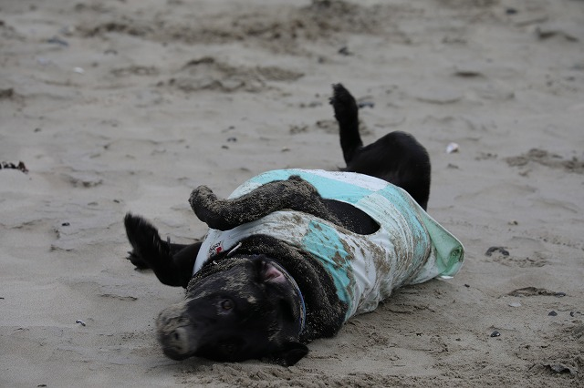 砂浜ゴロゴロ