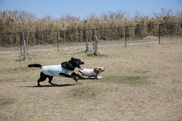 ランで走るマルとムギ