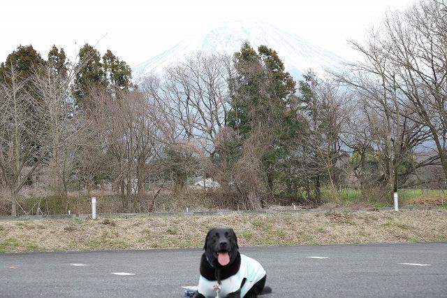 盲導犬駐車場から富士