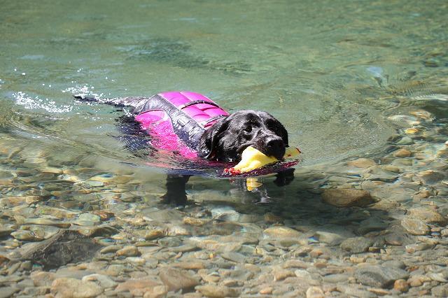 元気に泳ぐマル
