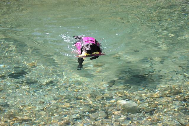 元気に泳ぐマル2
