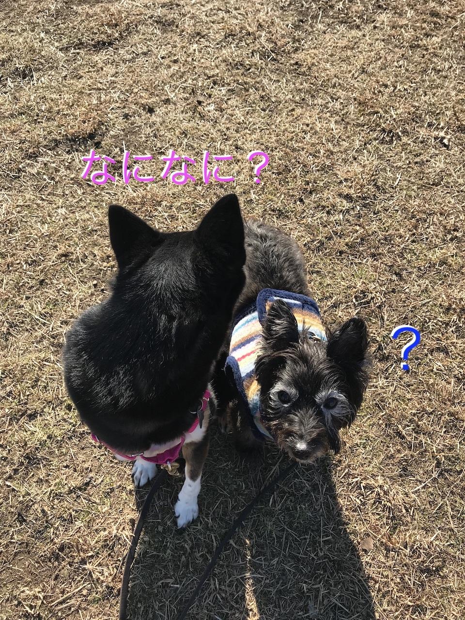 2019-01-19_13-33-26_172.jpg